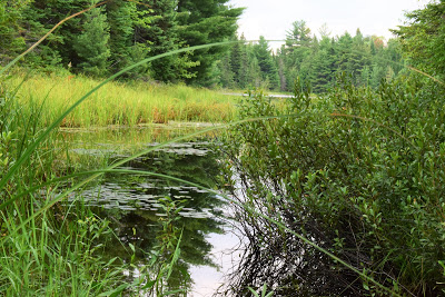 Pure Horse Sense Blog- Algonquin park hike next to a lake