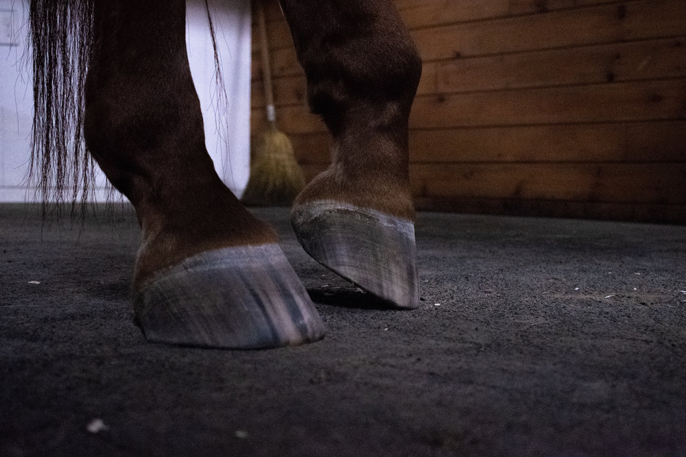 Taking pictures of my horse's hooves after my ride