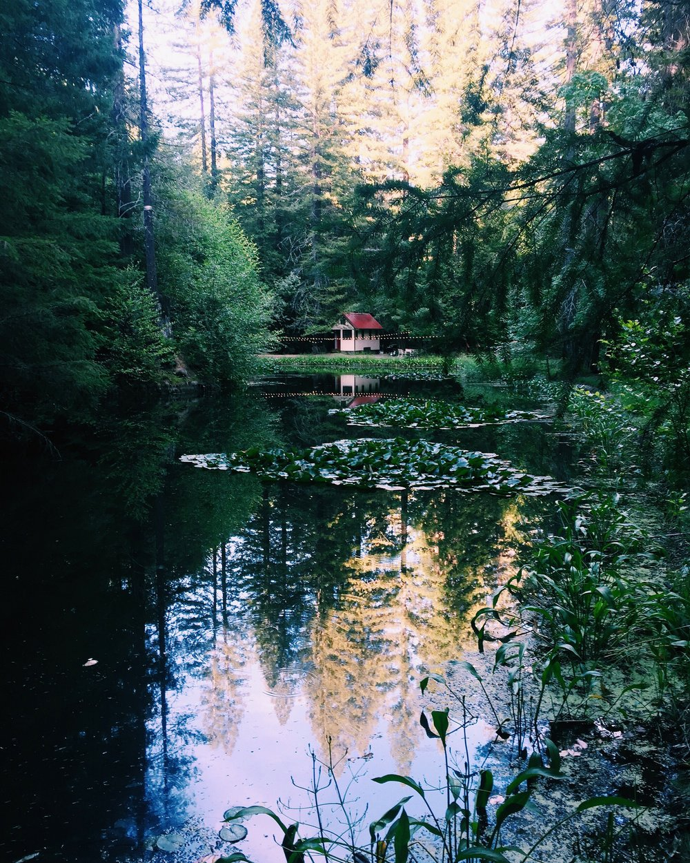 Cabin-in-the-woods.jpg