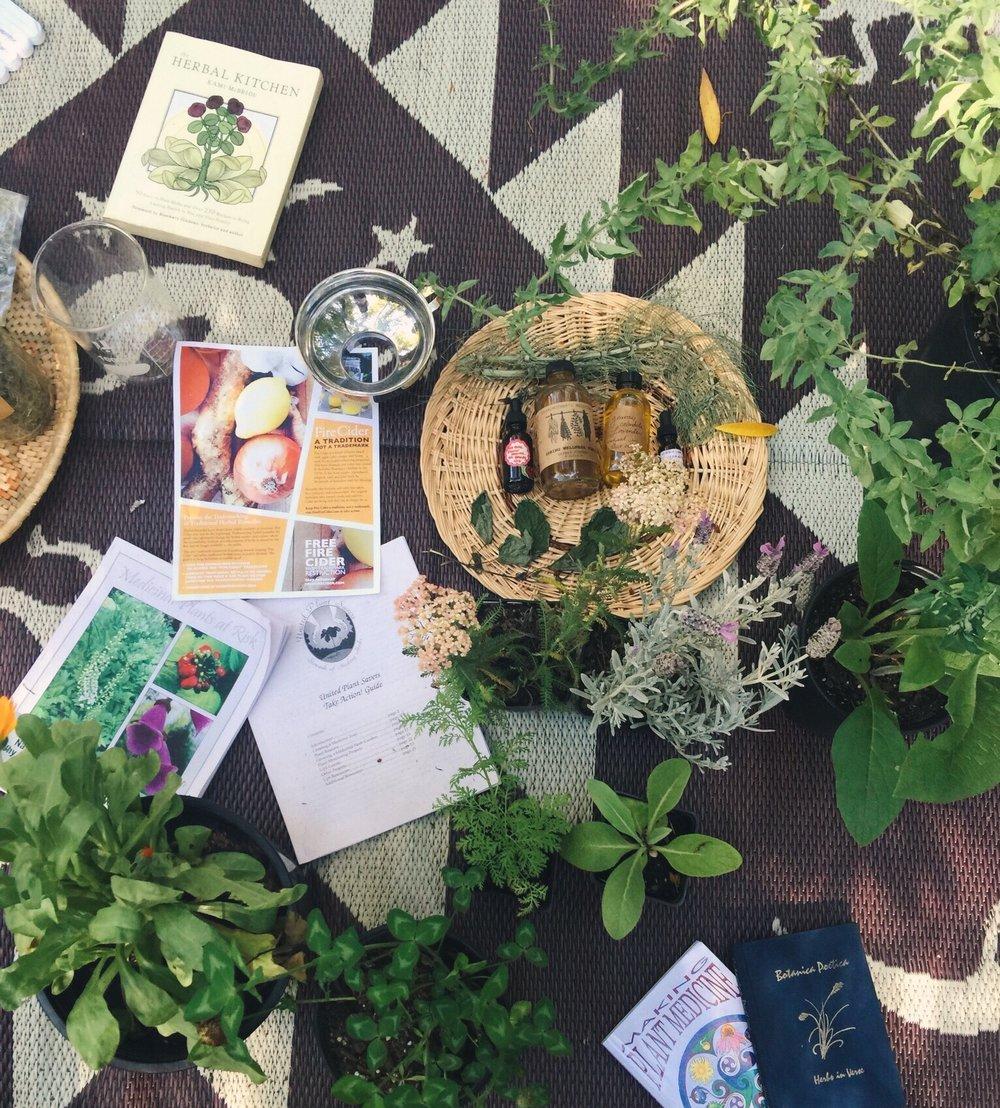 Herbalism-course.jpg
