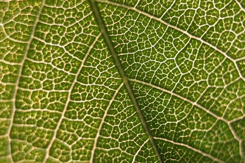 Extreme close up of leaf.jpg
