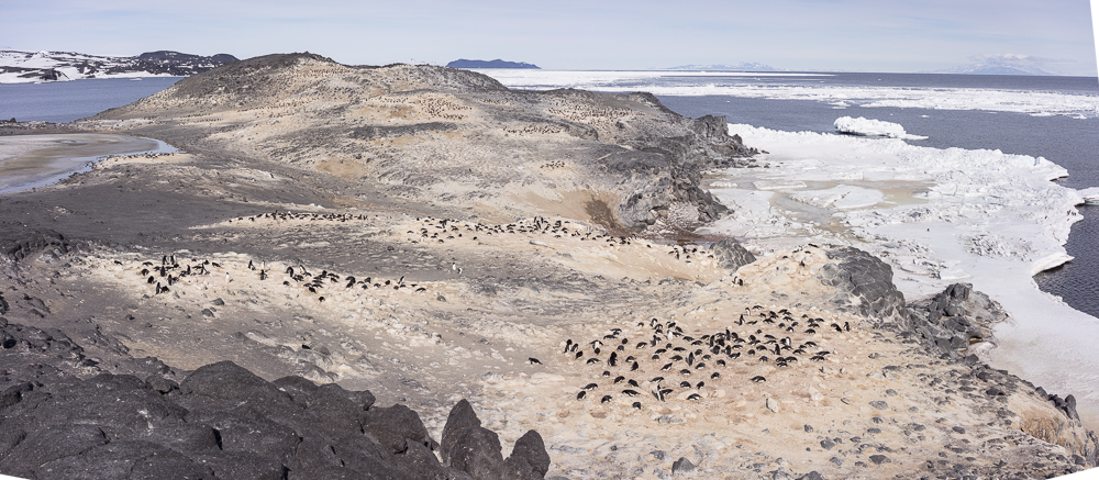View overlooking Adelie penguin colony