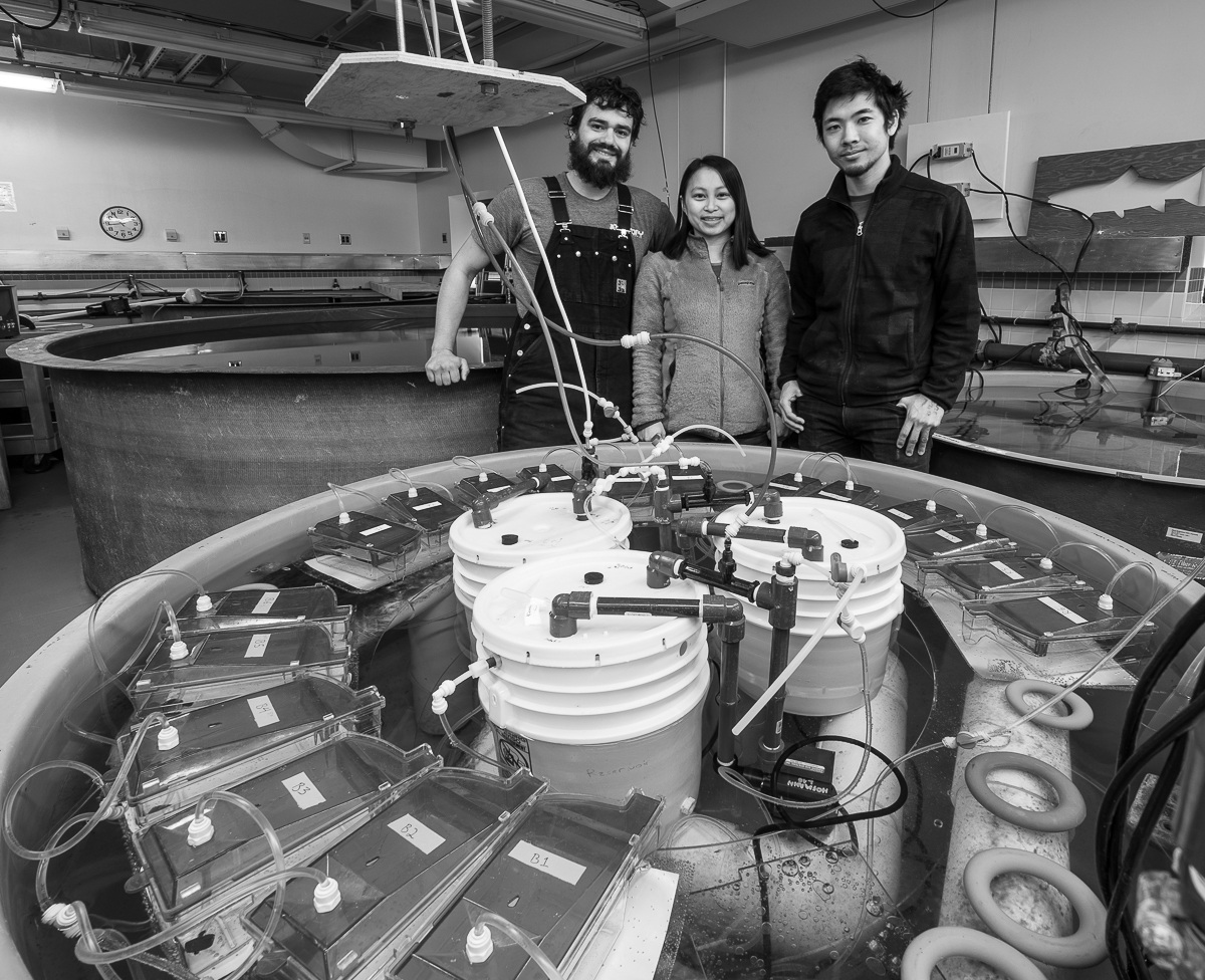 Kevin Johnson, Juliet Wong and Umi Hoshijima in the Crary aquarium at the tank where they are experimenting with different Carbon Dioxide levels.