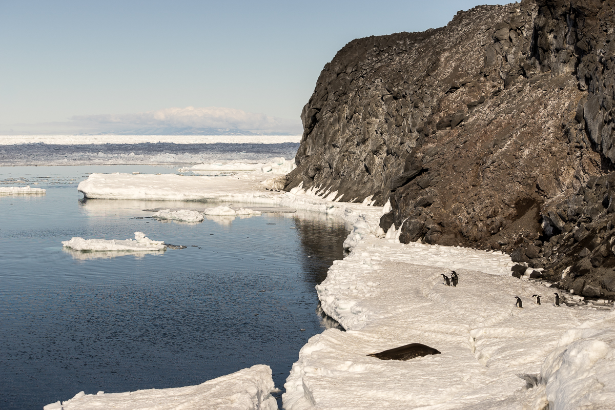 Adelie penguins gathering for the group dive into Arrival Bay, Flagstaff Point beyond.