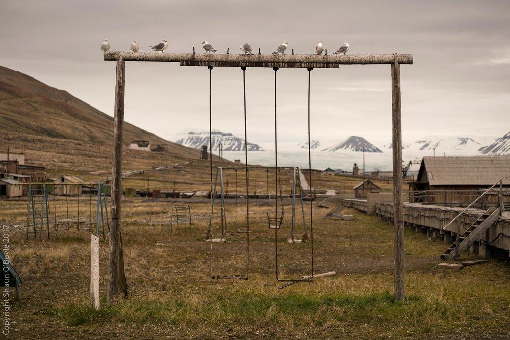 Playground and Glaucous Gulls, Pyramiden, Svalbard