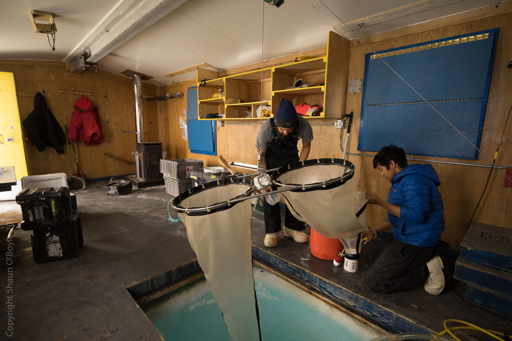 In #3 Fish Hut Kevin and Umi checking and collecting Pteropods from the ice hole