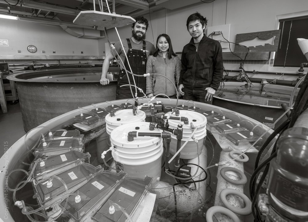 Kevin Johnson, Juliet Wong and Umi Hoshijima in the Crary aquarium at the tank where they are experimenting with different carbon dioxide levels