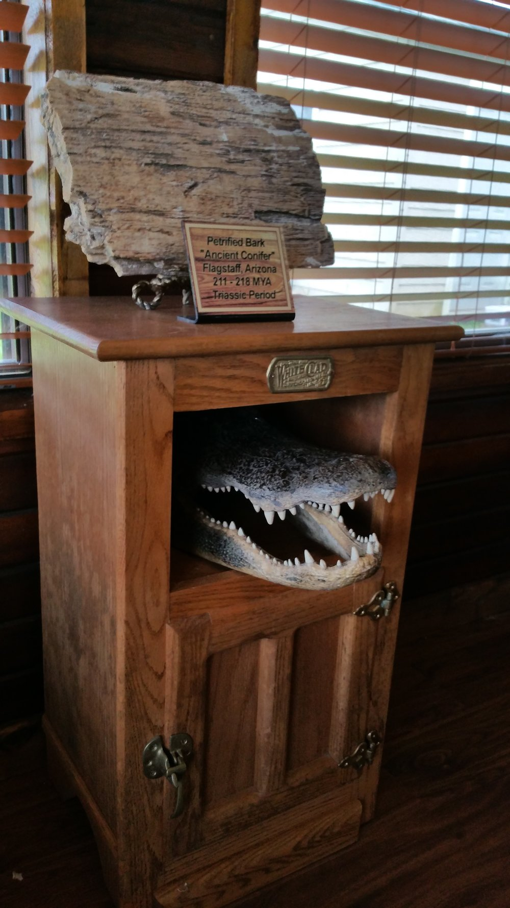 L2 alligator & petrified wood.jpg