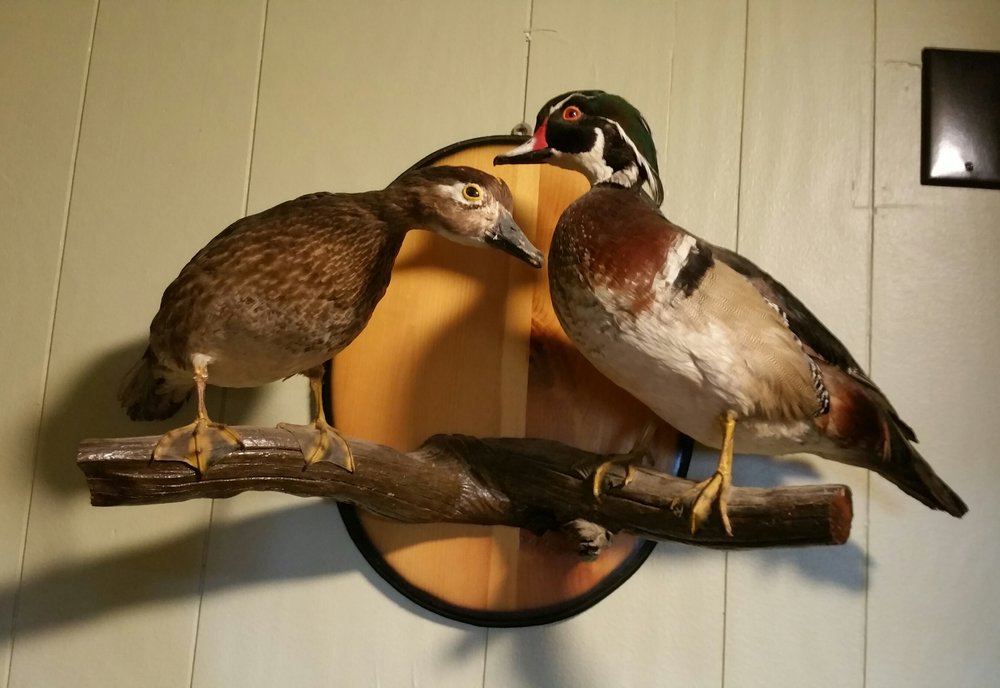 L2 wood ducks.jpg
