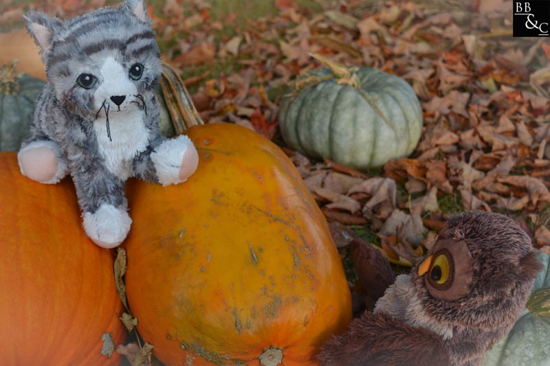 you know Hoot, I love autumn.  why, Penelope?