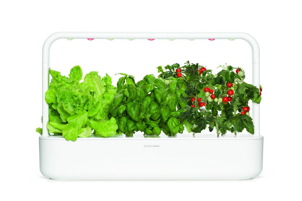 SG9_white_lettuce_basil_tomato_large.jpg
