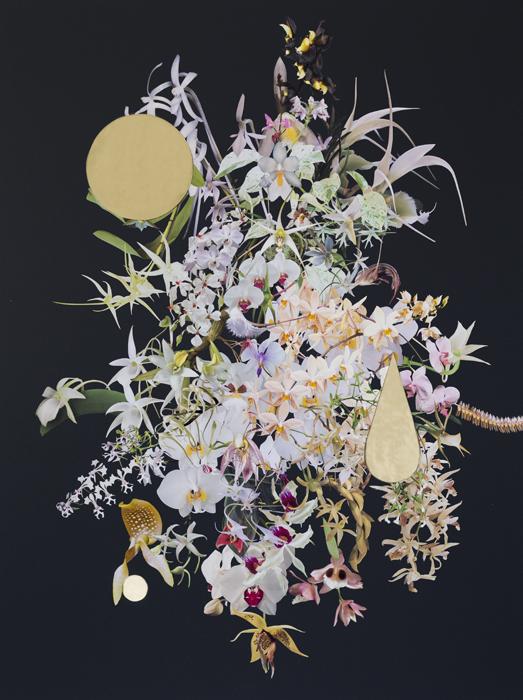 StephenEichhorn-Orchids-10.jpg