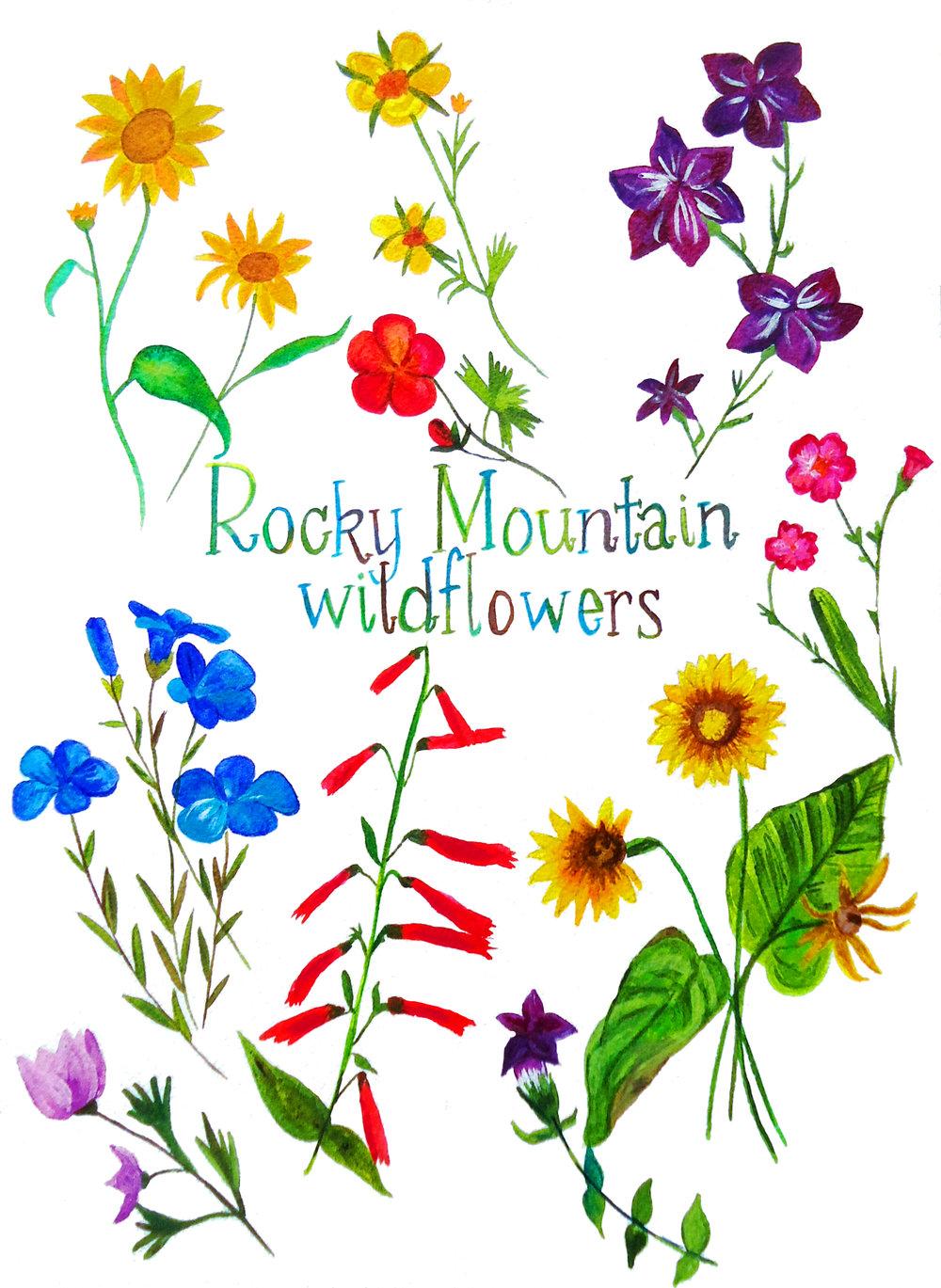 rocky mountain wildflowers.JPG