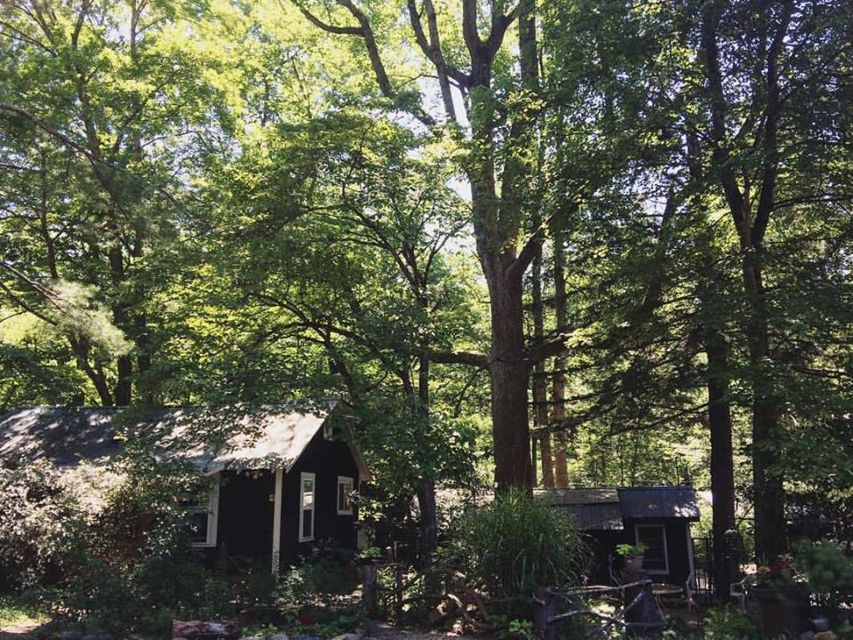 My current home and work space: a cabin in the woods, in the Blue Ridge Mountains of North Carolina.