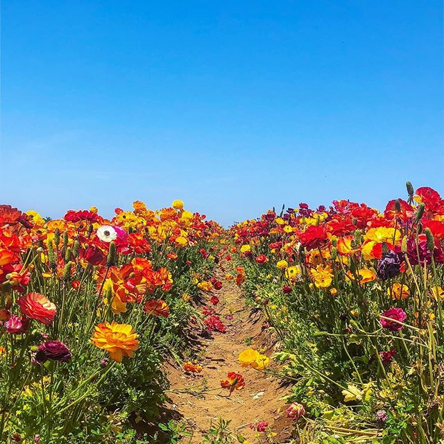 Oh my ♥️🧡💛 My sis @jordanyounis is exploring San Diego and sent me this beauty today... my heart! 😍 Happy Earth Day! 🌍 #flowersforever