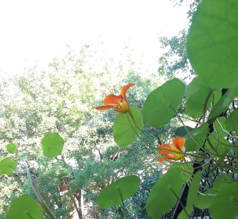 FLOWERS IN AIR