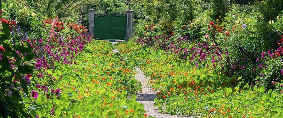nasturtium-path-in-monets-garden-giverny-carol-ailles.jpg