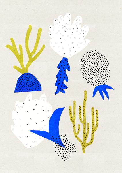 coralcomp.jpg