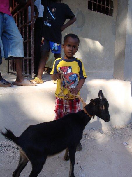 Haiti_Goats 1.jpg