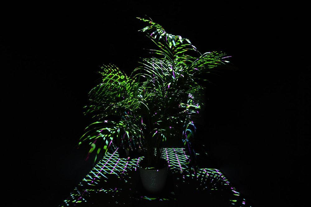 niskanensalo-palmudiskokiasma1.jpeg