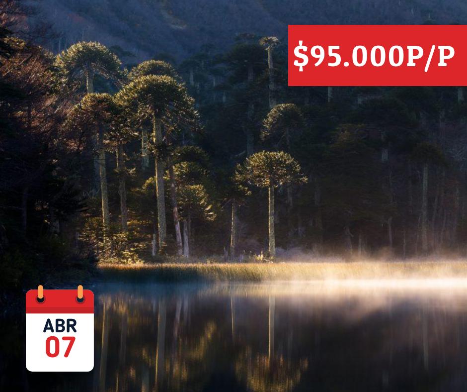 - Tour PN Tolhuaca y Termas de MallecoDescubre uno de los parques nacionales más visitados de Chile y sumergido en la belleza escénica del lugar.