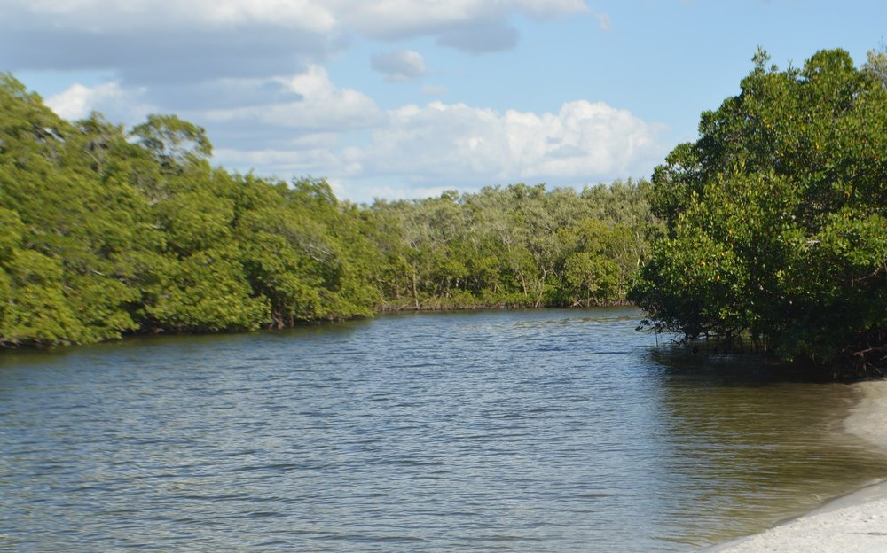 Paddle your way through the mangroves and go exploring at Mound Key!