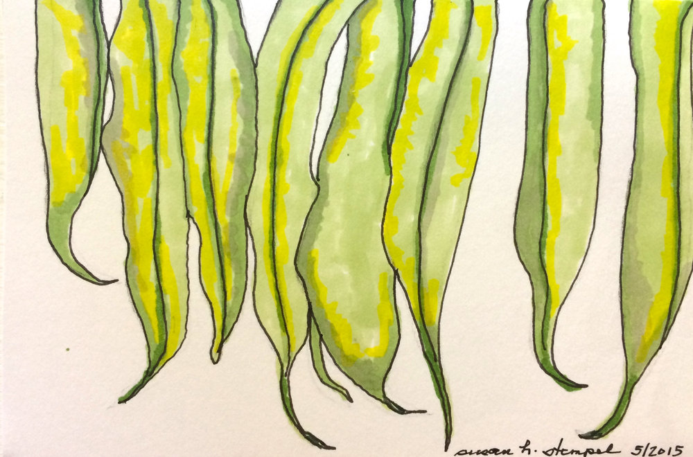 """SOLD """"4"""" x 6"""" pen & ink on paper.  """"Hanging beans:"""""""