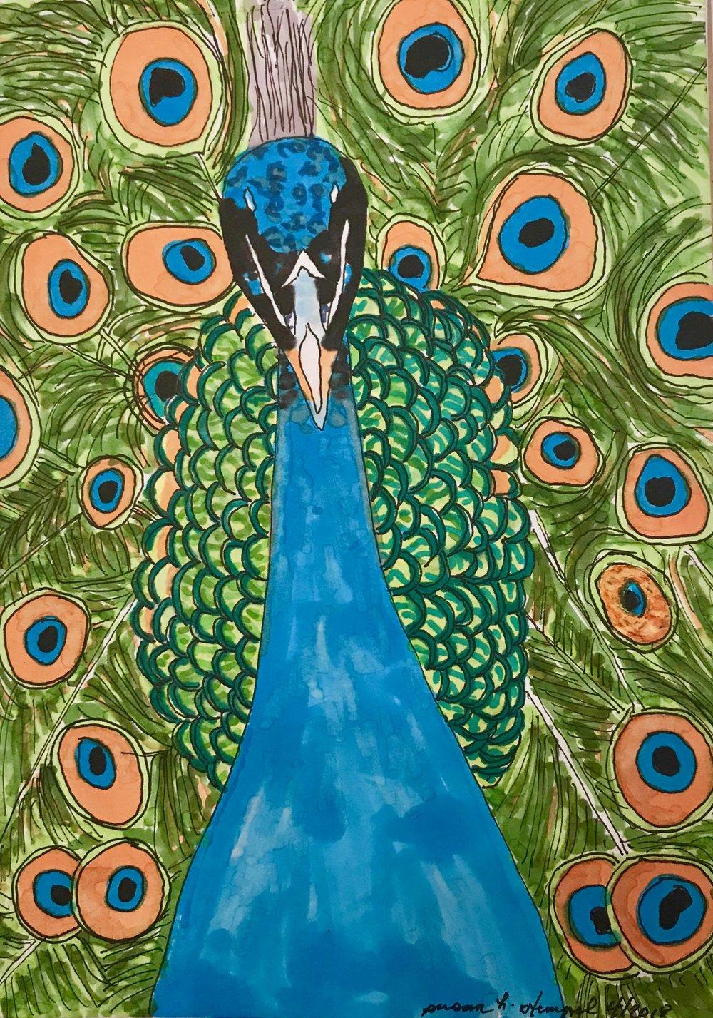 "$300  5"" x 7"" pen & ink on paper.  ""Peacock Splendor."""