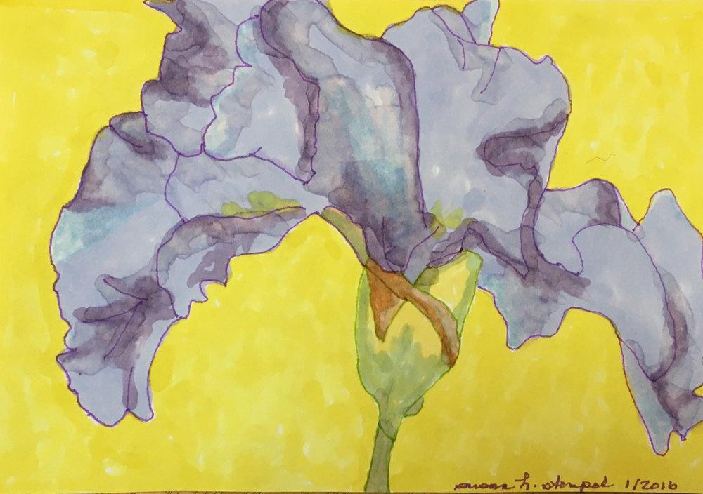 "$300.  5"" x 7"" pen & ink on paper.  ""Iris on Yellow""."