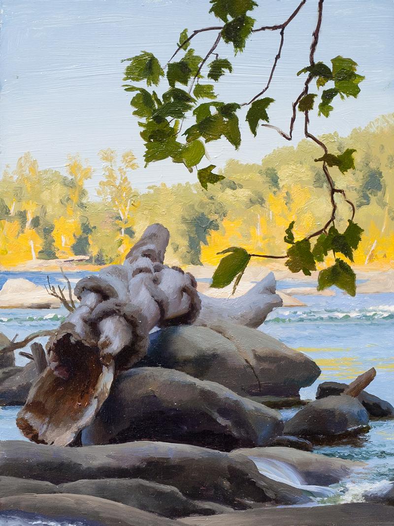 Stranded Log - Still River 1
