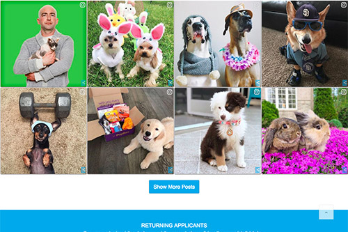 Petco_website_socialfeed.jpg