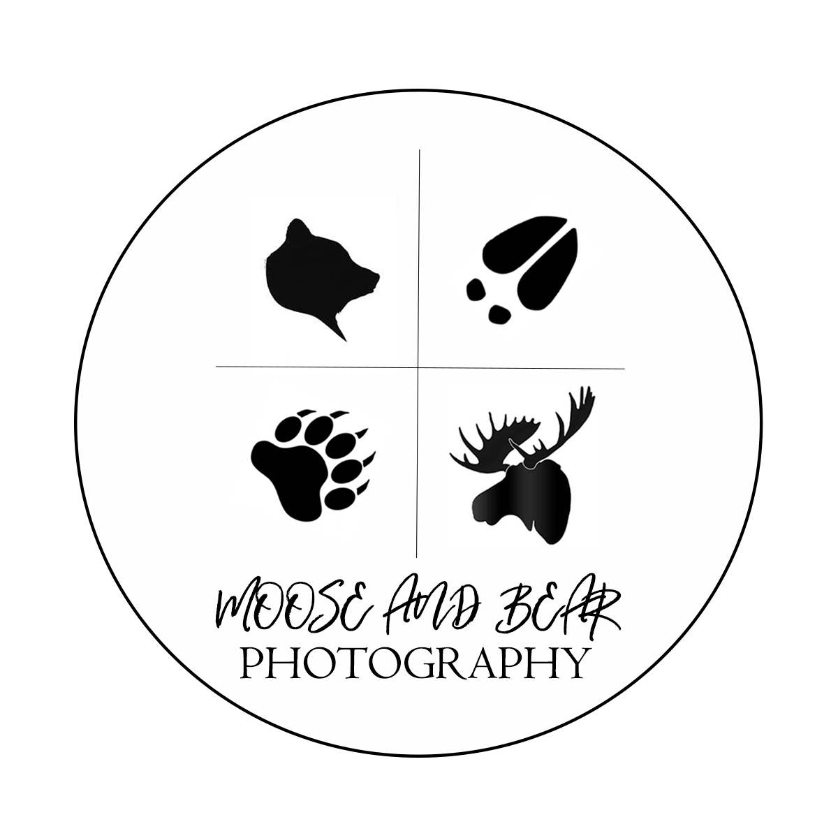 Moose and bear photography