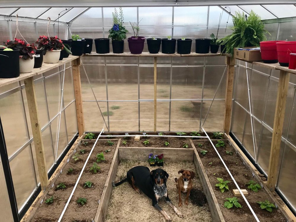 Doggo GreenHouse.jpg