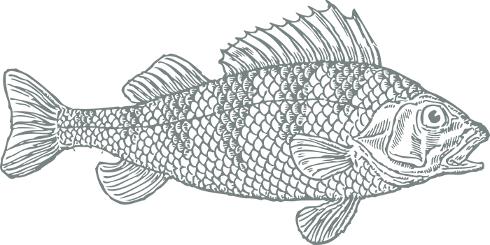 FISH copy copy2.png