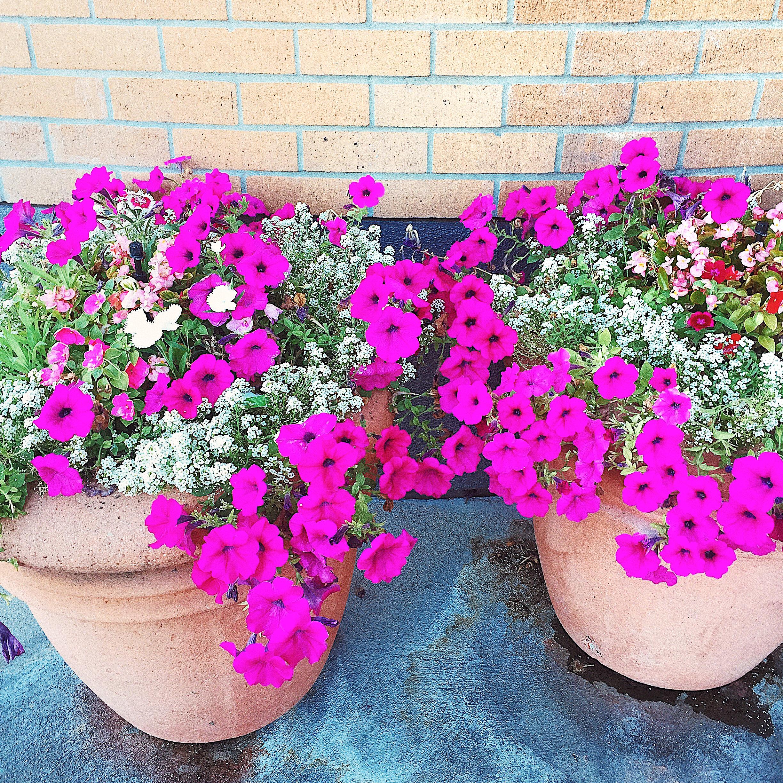 floras.png