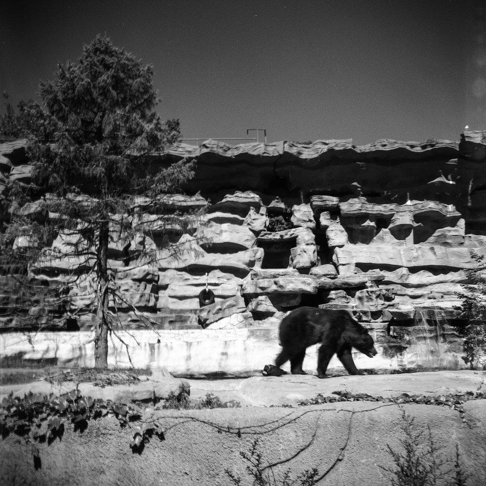 1956 Kodak Duaflex IV Photo Medium Format 620 Film Zoe Kissel Photo detroit zoo