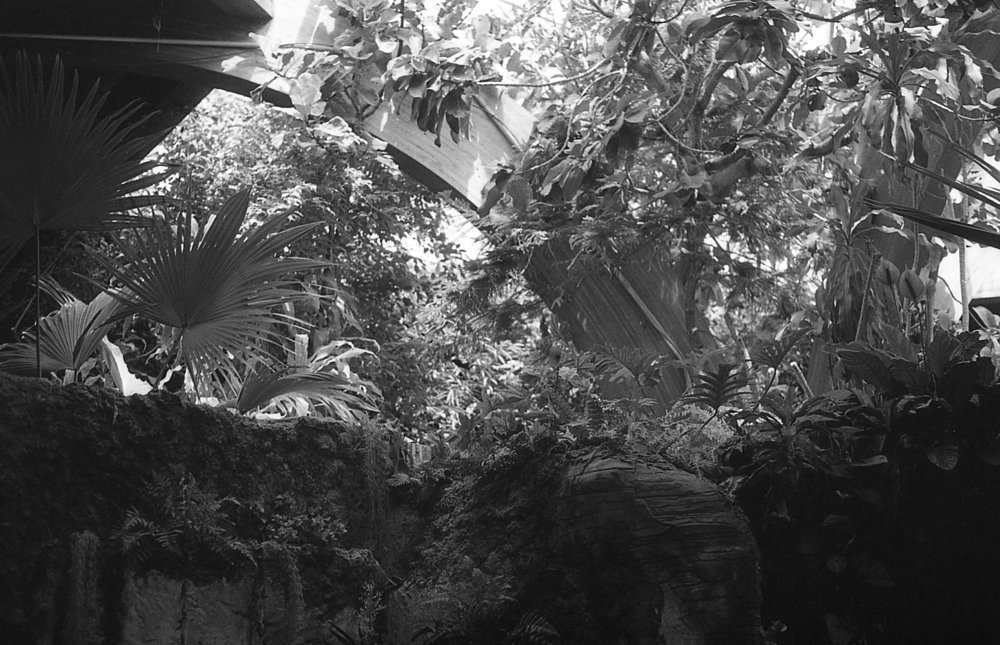 1981 Minolta X-700 Photo 35mm Film Zoe Kissel detroit zoo michigan