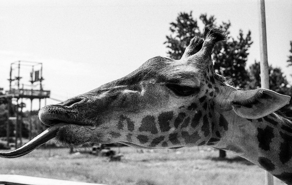 1981 Minolta X-700 Photo 35mm Film Zoe Kissel toledo zoo