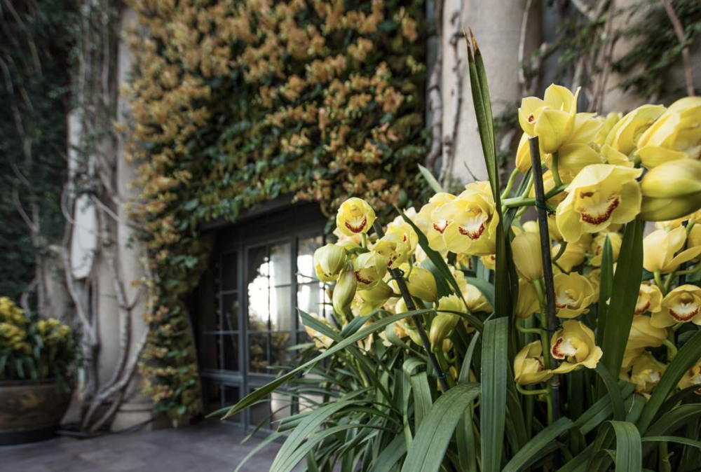 Urns filled with yellow Cymbidium orchids - Photo courtesy of @LongwoodGardens