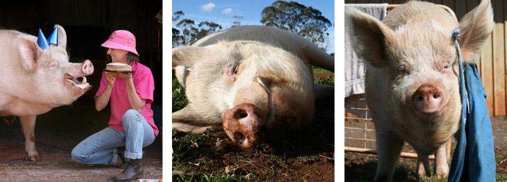 Image via  edgarsmission.org.au