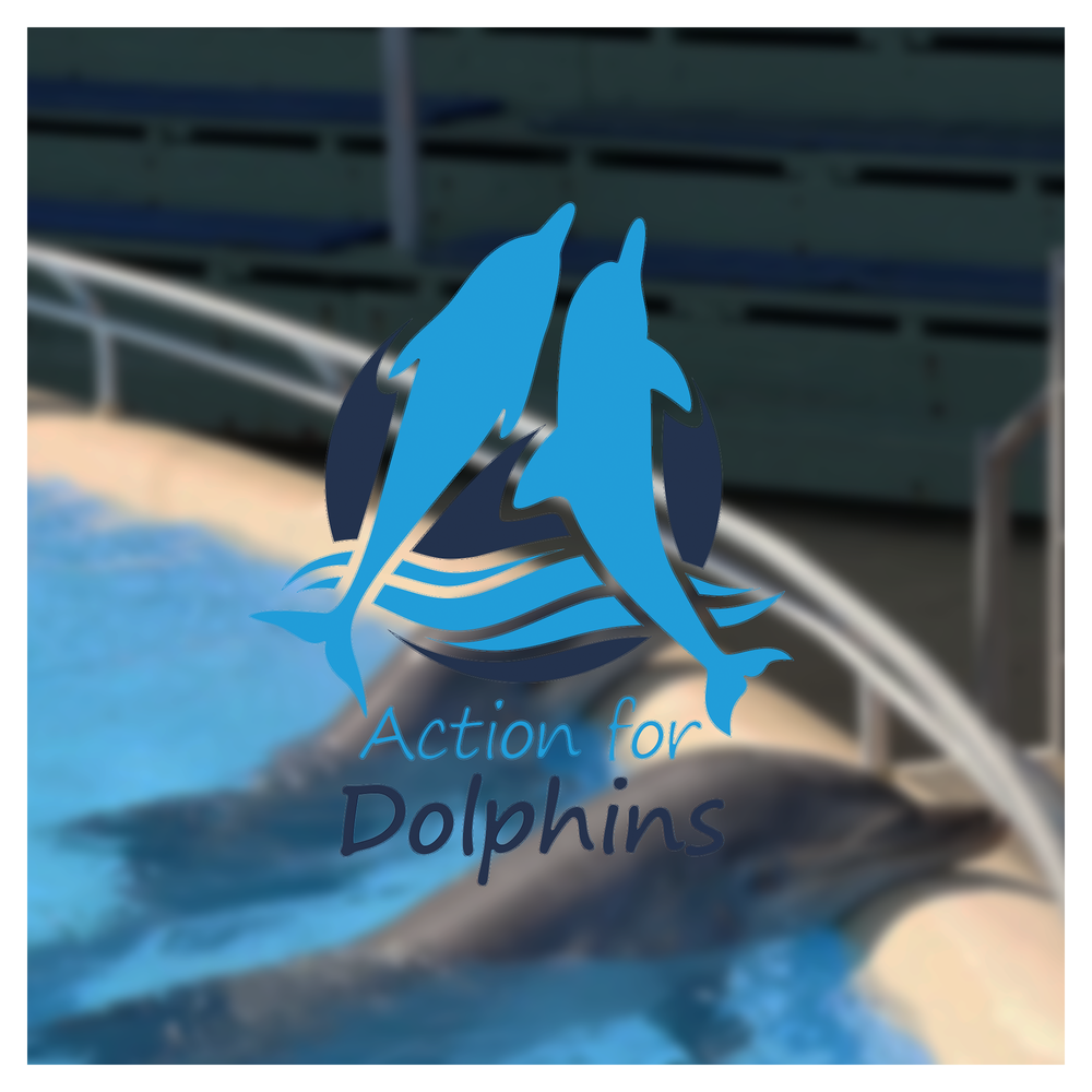 action-for-dolphins-case-study-framed.png