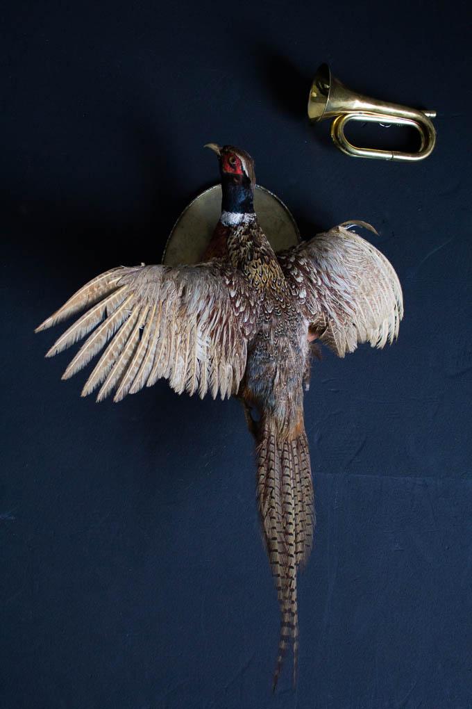 koskela_pheasant