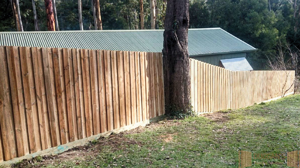 Timber fence with a Tree