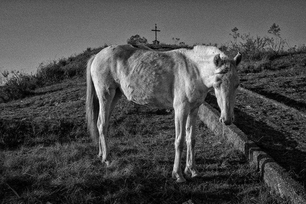 Horse Minas.jpg