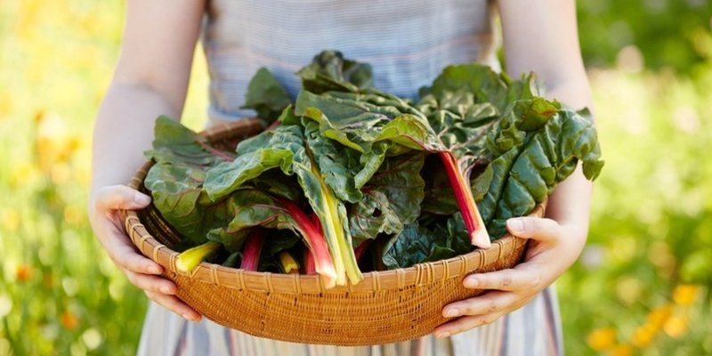 - 15 Plant-Based Foods That Meet Your Calcium Needs