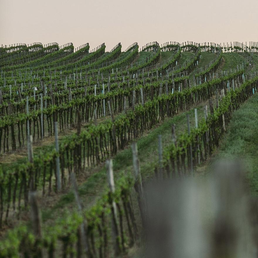 Unsere Weinlagen - Das Beste vom nördlichen Weinviertel bis zur südlichen Steiermark.mehr erfahren ⟀