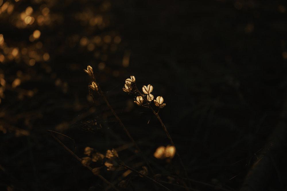 studio_nature_lo_3.jpg