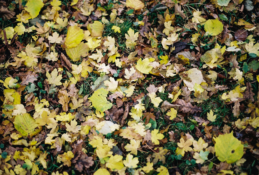 autumn_film_5.jpg