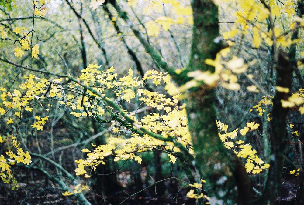 autumn_film_9.jpg