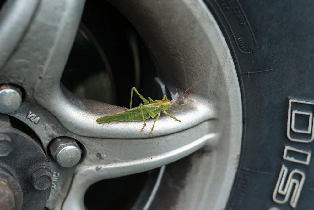 Giant beast in the van wheel